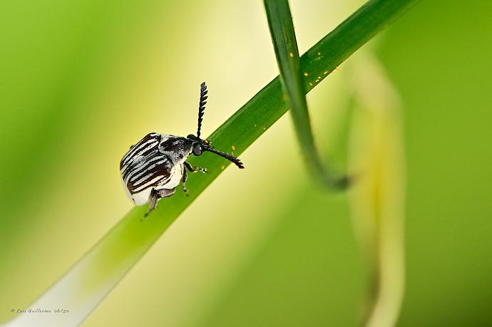 Escarabajo-1-LG-QRoo-06_20