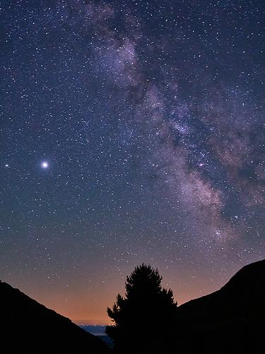 El árbol contemplando las estrellas