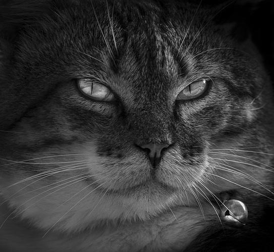 gato-web