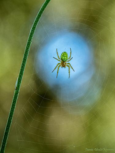 026_Araña sobre fondo azul...-1920